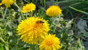 Biene geht fremd ;-)